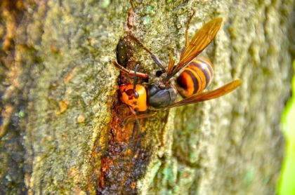 ハチについて